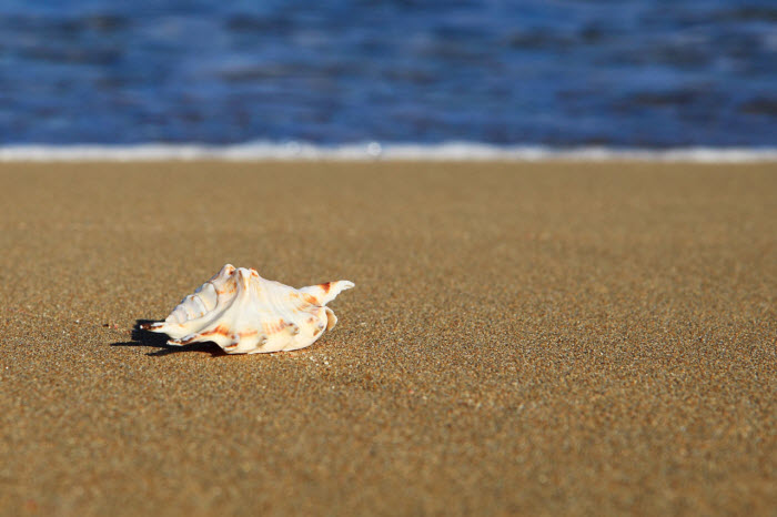 Seashells or the Next Internet Paradigm Shift